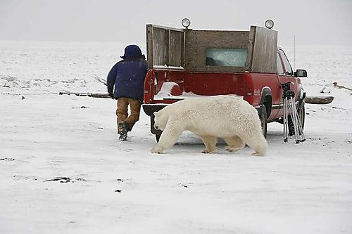 Chased by polar bear at Kaktovik
