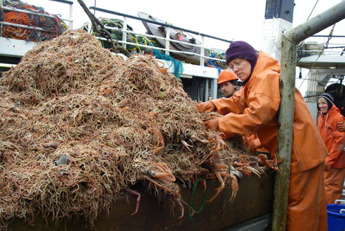 2008 fisheries survey - loaded net